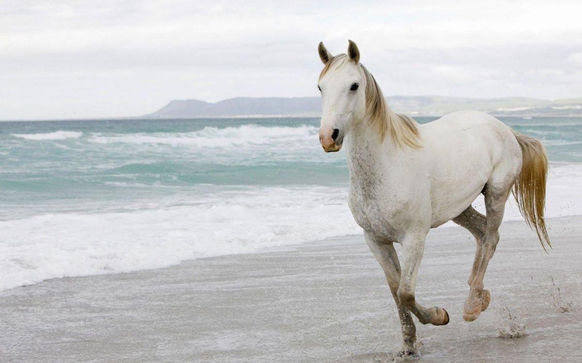 Qué significa soñar con caballos blancos