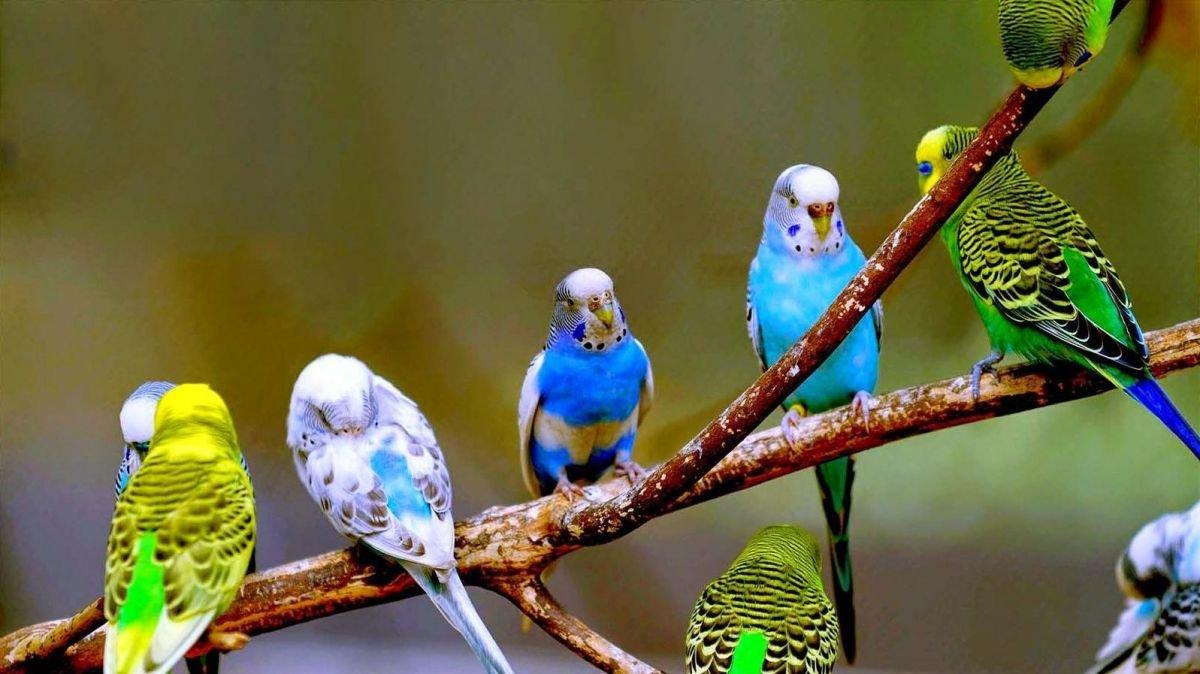 Qué significa soñar con pájaros de colores