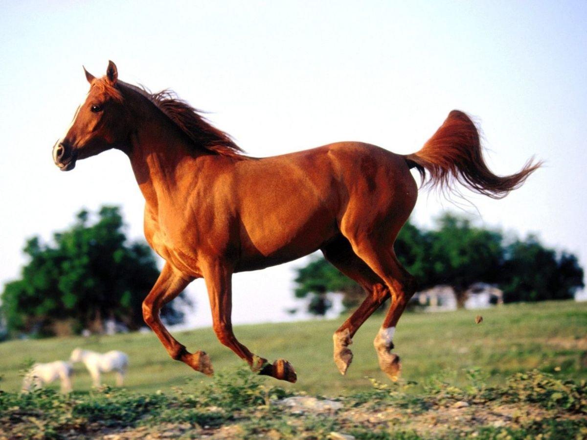 Significado de los sueños con caballos marrones