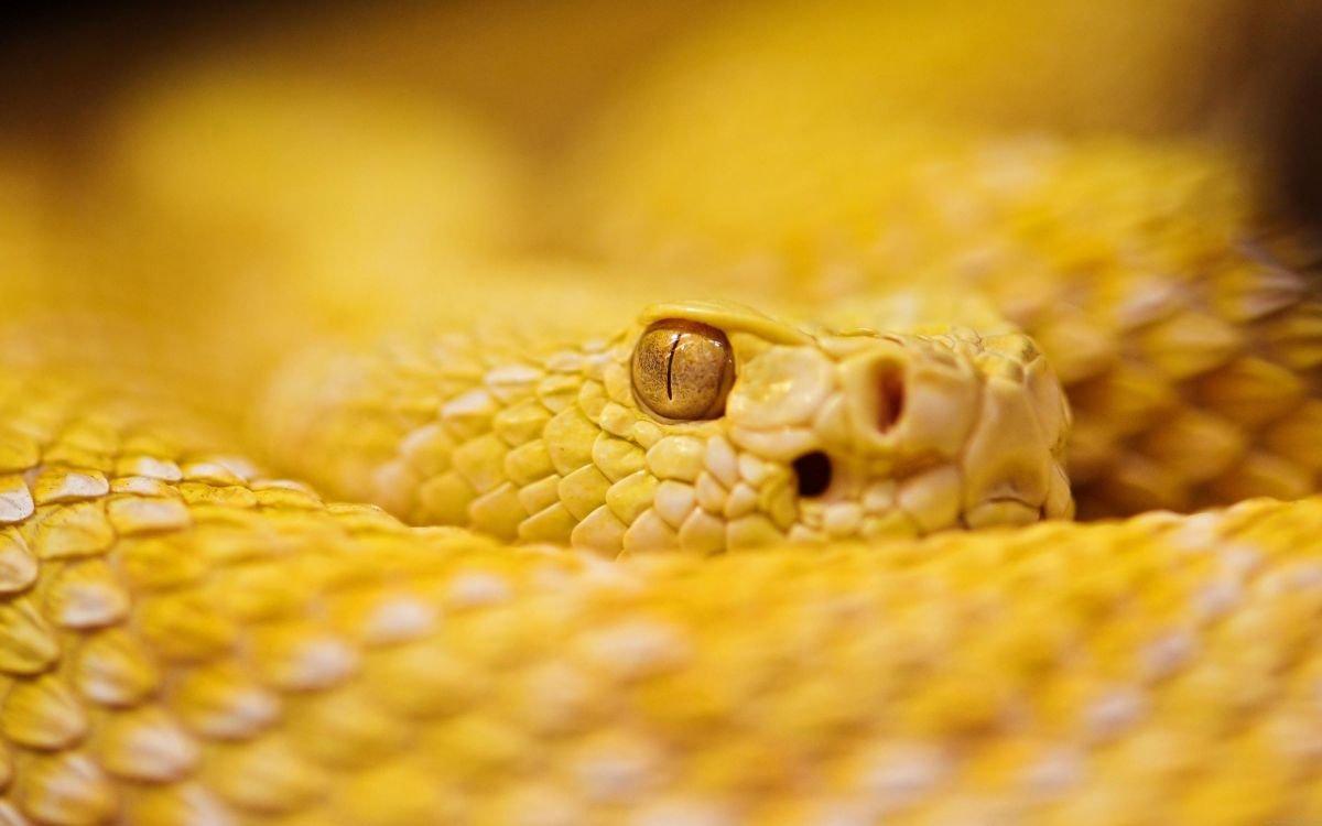 Significado de los sueños con serpientes amarillas